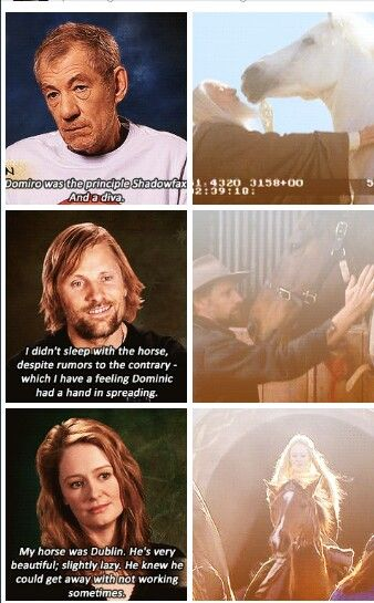 Aragorn actually ended up buying the horse that played as Brego...which I think was pretty sweet:)  <-- He also bought one of the movie horses for one of the stunt girls because she couldn't afford him.  He truly has a heart of gold!   He IS Aragorn!