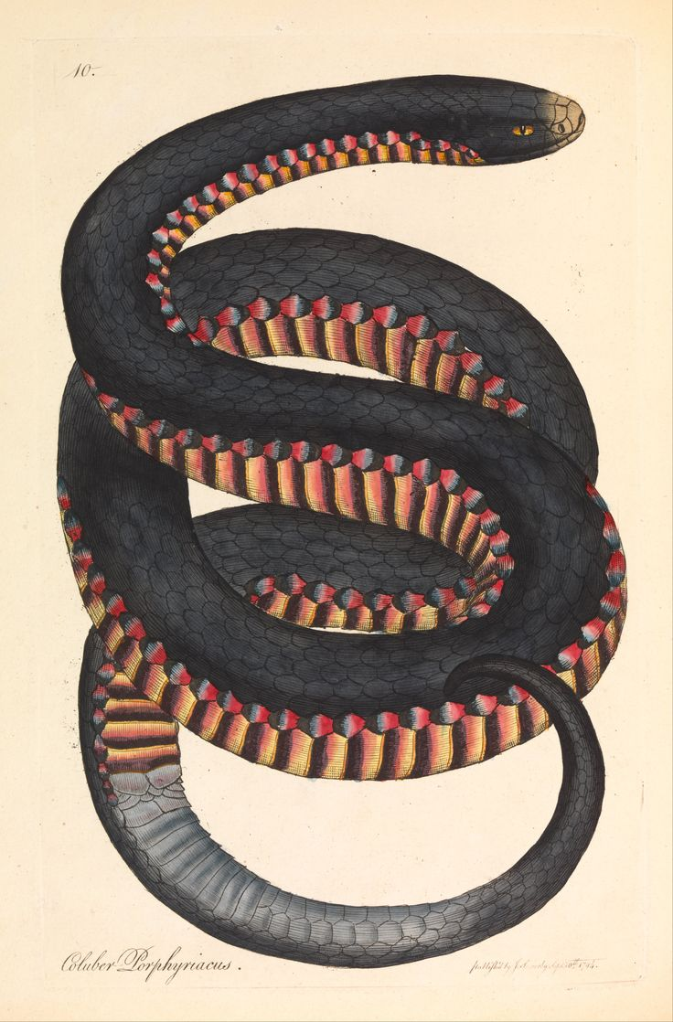 1129 best art antique illustrations of animals images on