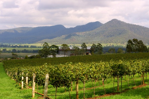 One of the vineyards at Broke in the Hunter Valley