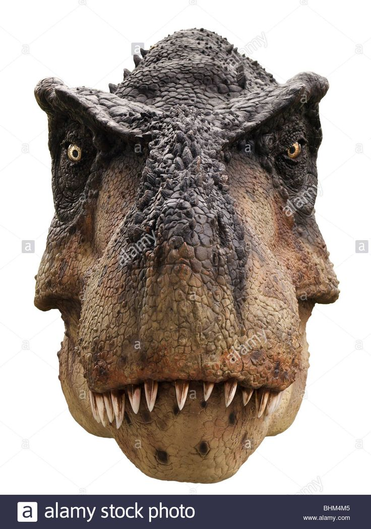Pin by Reynold Tagore on T REX in 2019 | Dinosaur art ...