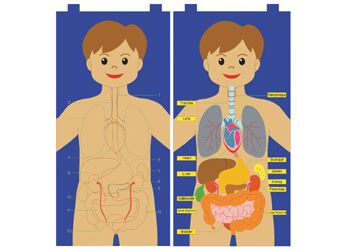 My Body Felt Chart - A felt chart of the human body with Velcro organs. Kids will have fun while learning about the human body and human anatomy.