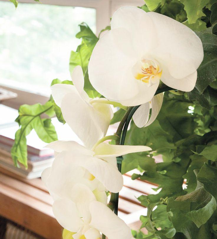abre1-como-fazer-com-que-a-orquidea-de-flor