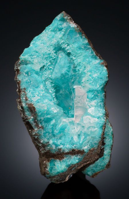 A beautiful turquoise-blue cabinet specimen of Aurichalcite with Calcite, bounded by dark chocolate brown rock.