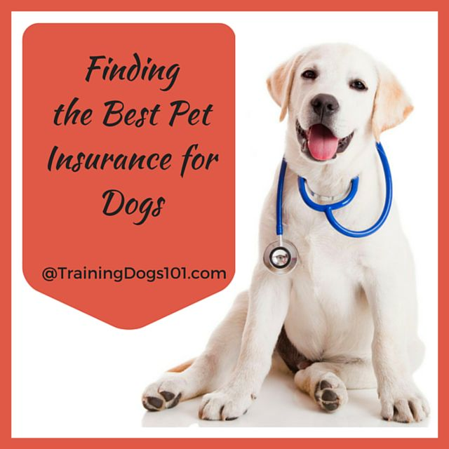 Finding the Best Pet Insurance for Dogs