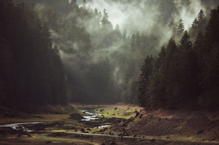 'Foggy Forest Creek' by Kevin Russ. See a curated collection of affordable photographic prints by visiting theartfolk.com. jpg