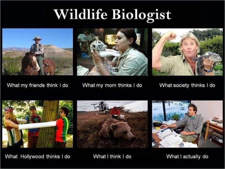 What do you have to take as a biology major?