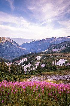 Art Calapatia - Wild Flowers Among the Mountains of Washington