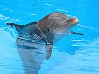 Dolphin World - Dolphins for Kids