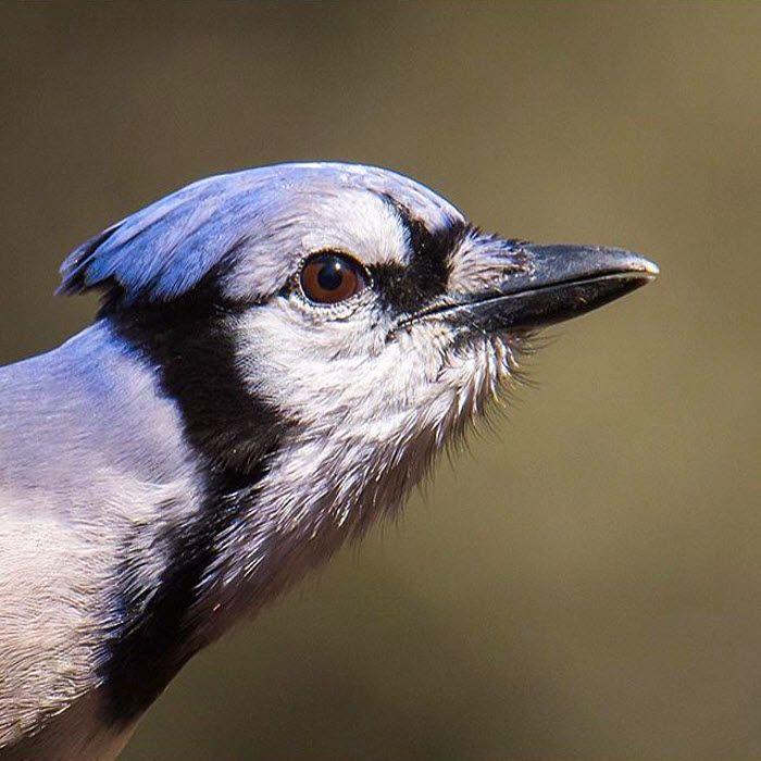 58 Best Wildlife In Myrtle Beach Area Images On Pinterest