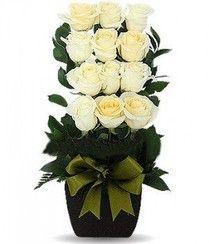 docena de rosas escalonadas