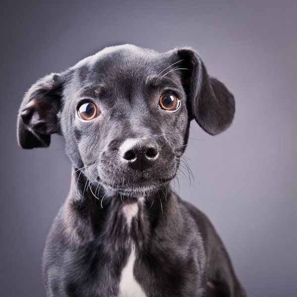 YES, I would adopt you in a heartbeat...    Sweet Portraits of Shelter Puppies by Michael Kloth