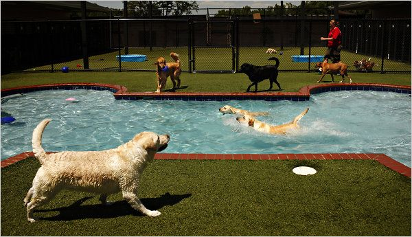Pet stay facilities convenient for air travelers pet resort - Hotels in chester with swimming pool ...