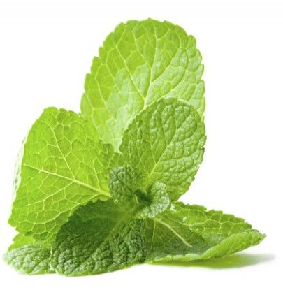 10 Hidden Health Secrets of Mint Leaves | Simple Dish | Quick, Easy, & Healthy Recipes for Dinner