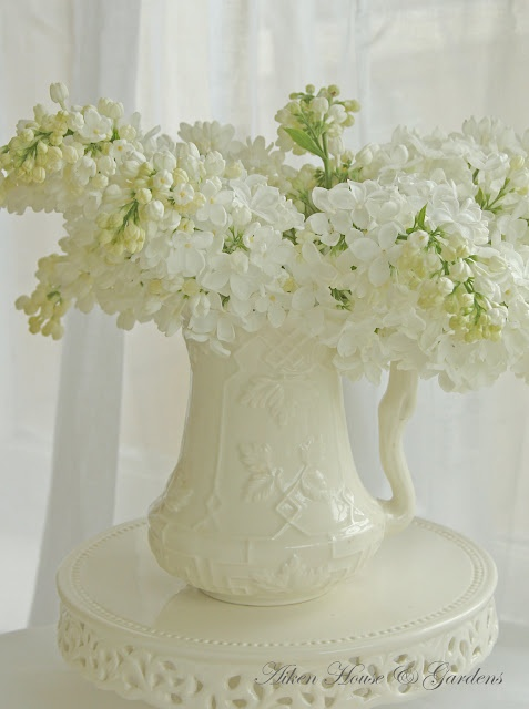 Lovely white lilacs in pitcher