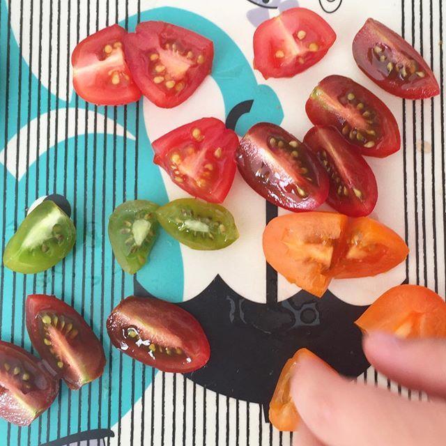 Als je kan kiezen tussen pap met aardbeien en boterham met pindakaas, dan kies je regenboogtomaten als ontbijt.