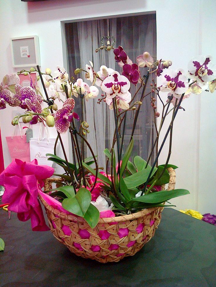 Orquídeas em cesto