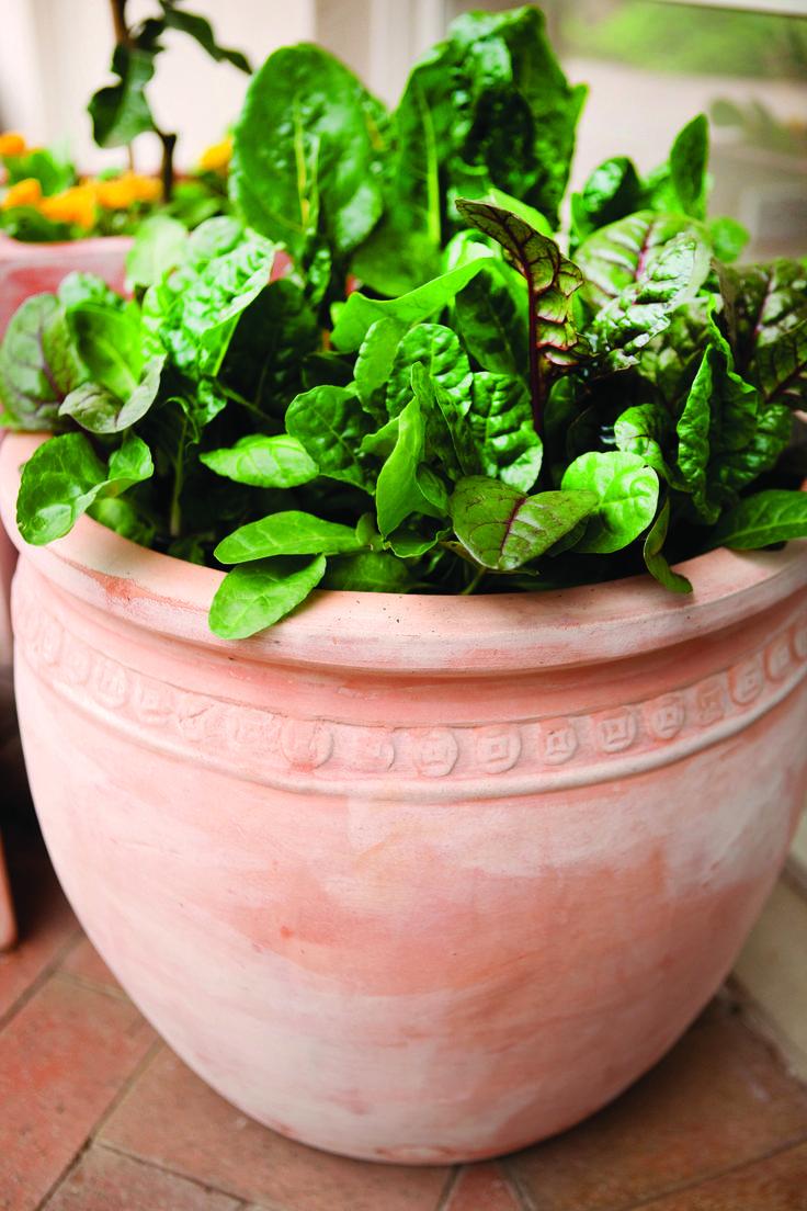 Northcote Pottery caféSTYLE Coin Pot #gardenvegetable #D.I.Y #fresh