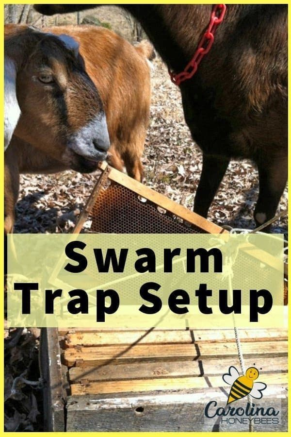 Swarm Trap Set Up and Check