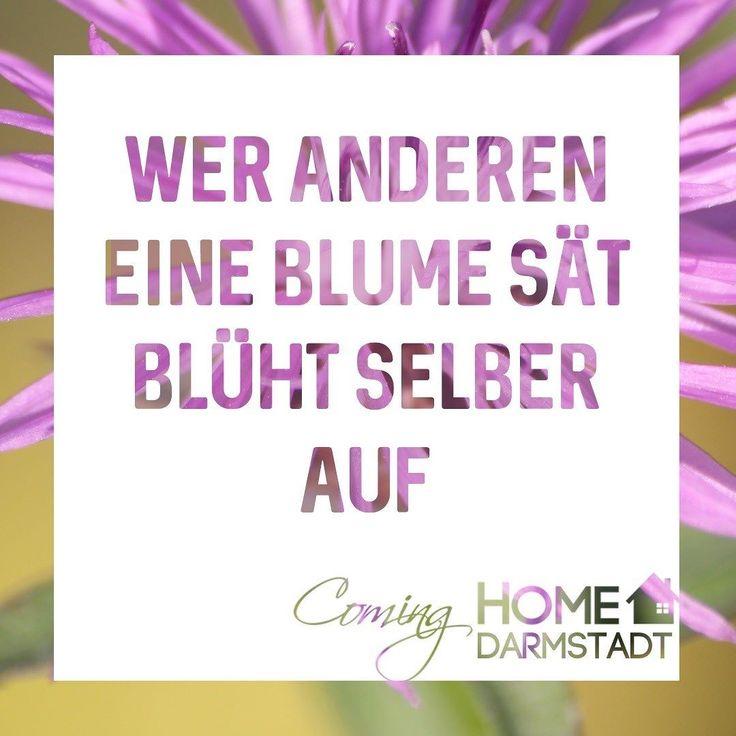 Wer anderen eine Blume sät blüht selber auf.  #andere #blume #säen #selber #aufblühen #blumen #blüten #werandereneinegrubegräbt #wiegottmirsoichdir #mensch #derandere #cominghome #darmstadt #positiv #fröhlich #hoffnung #zuhause #zuhausesein #nachhause #nachhausekommen  #spruchdestages #sprüche #weisheit #kleineweisheit #kleineweisheiten