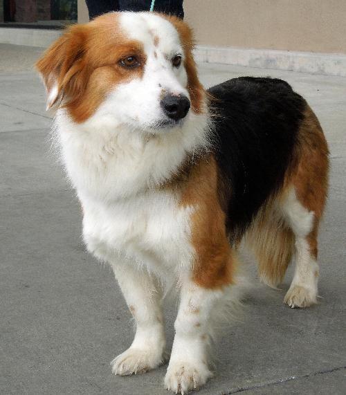 Dog Finder Adopt a Dog or Cat Near You petfinder dogs