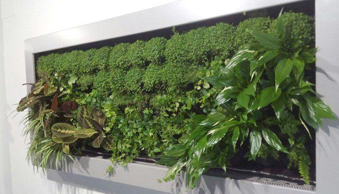 17 mejores ideas sobre jardines verticales en pinterest for Historia de los jardines verticales