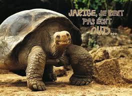 Afbeeldingsresultaat voor grappige schildpad plaatjes met tekst