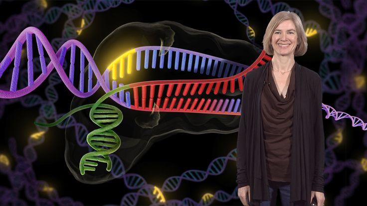 http://www.ibiology.org/ibiomagazine/jennifer-doudna-genome-engineering-with-crispr-cas9-birth-of-a-breakthrough-technology.html Talk Overview: Jennifer Doud...