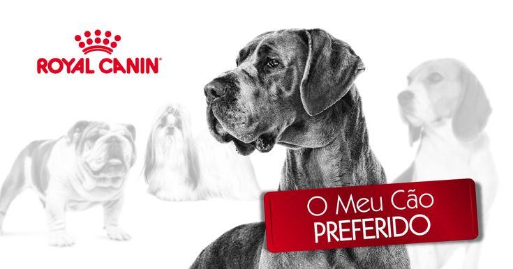 Vote no seu cão preferido e participe no sorteio de UM ANO DE ALIMENTAÇÃO de #RoyalCanin. Boa sorte!