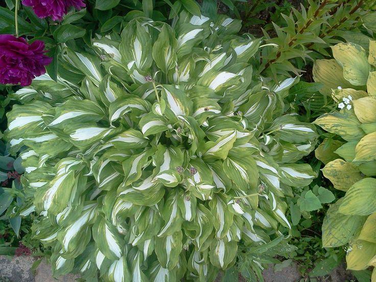 Растения - обереги