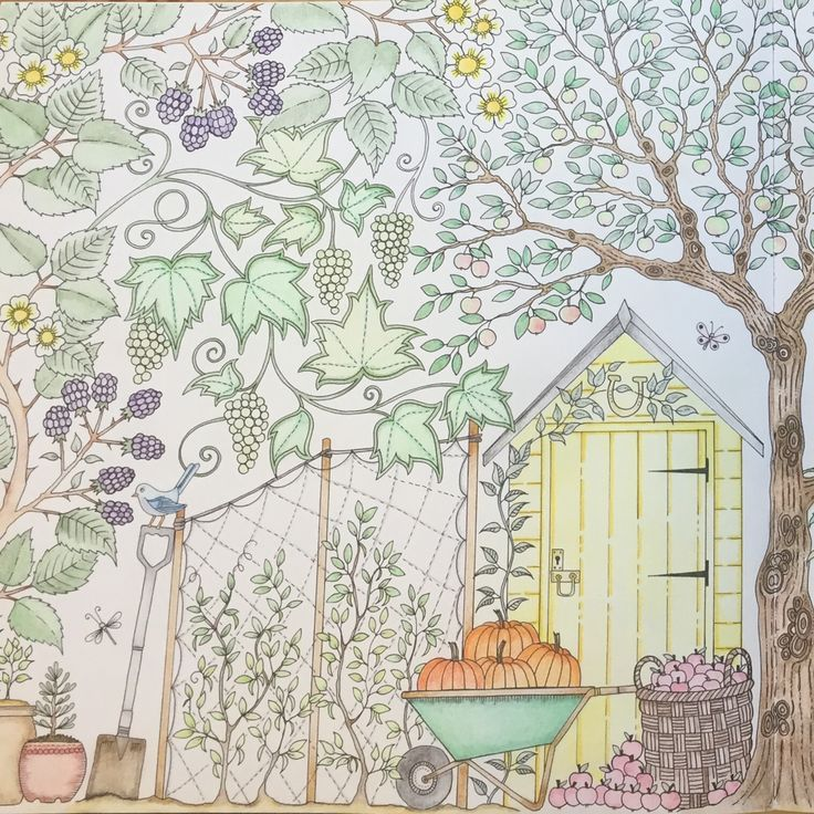 Mary Quite Contrary How Does Your Garden Grow My Colouring Johanna Basford Secret