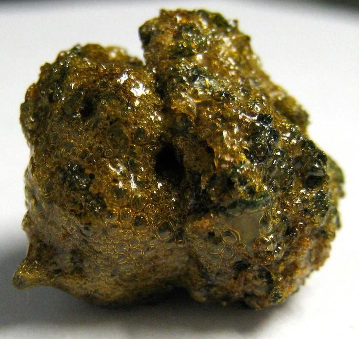 "Colorado Honey Bud; This ""Honey Bud"" is a nug of golden goat dipped in Butane Hash Oil (BHO). It makes the hash oil more easy to handle."