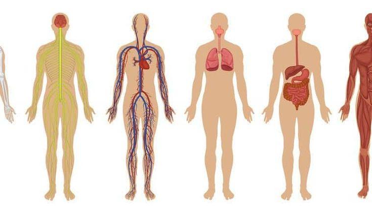 Co się stanie jak przestanę jeść mięso?- pytasz.Otóż rezygnując z jedzenia mięsa niewątpliwie możemy się spodziewać wielu zmian. I to nie tylko zdrowotnych.