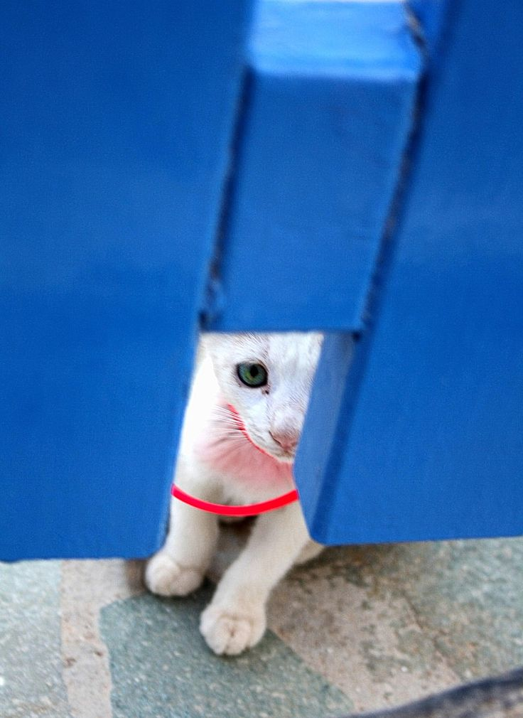 Can i please come in now? by Vag Ant on 500px #Greece #Sikinos #2DesignPhotography