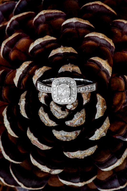 Engagement ring on a pinecone, incorporating the season and natural surroundings in a ring shot.  Photos by Hilary Cam Photography