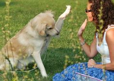 Cómo enseñar a un cachorro a chocar los cinco