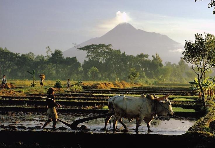 Mount Merapi- Yogyakarta-Indonesia