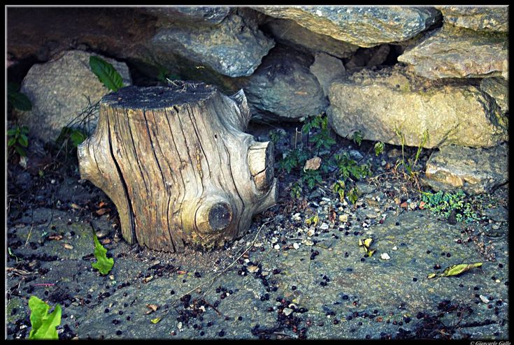 Life and death : piece of wood trunk and seeds by Giancarlo Gallo