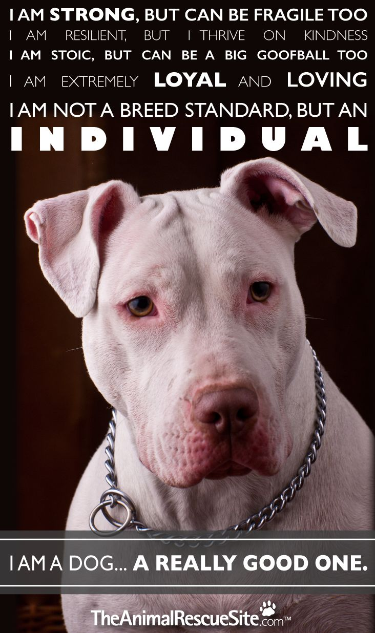 National Pit bull Awareness Day, The Animal Rescue Site
