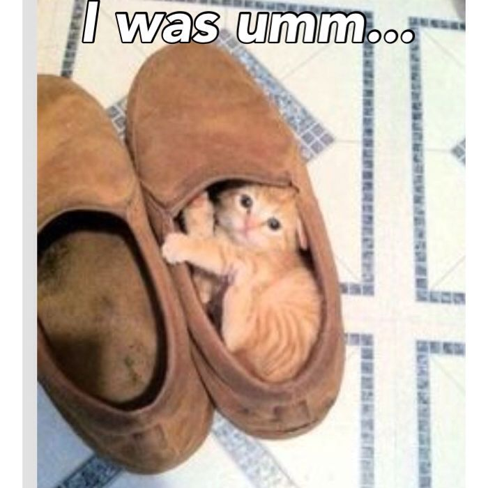 Things your cat does without realising
