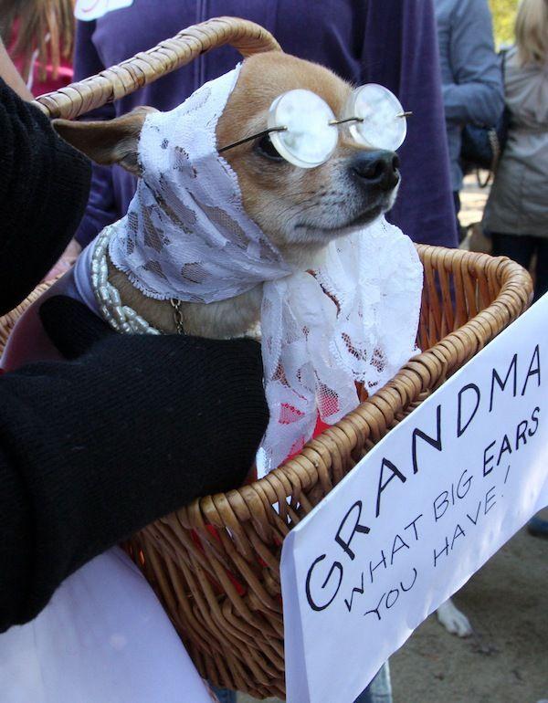 28 absurde Halloweenkostuums voor honden - Girlscene
