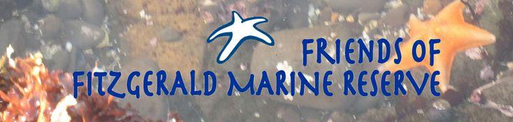 Visit the Tidepools! @ Friends of Fitzgerald Marine Reserve