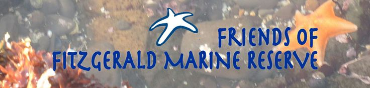 Visit the Tidepools! @ Friends of Fitzgerald Marine Reserve