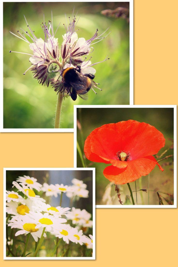 Bloeiende bloemen in de Wildste Tuin.Niet alleen de bijen genieten ervan#Bloemen#NetlPark