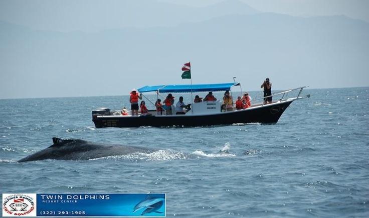 Kiama Whale Watching Tour