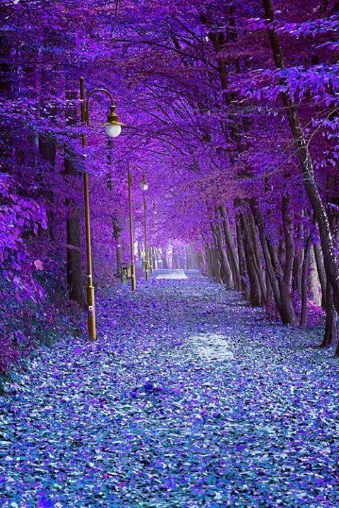 Autumn alley..  (by Olga)