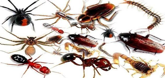 شركة رش الصراصير شركة رش الناموس النامس شركة رش النمل شركة رش الفران الفئران شركة رش البرص Pest Control Services Best Pest Control Pest Control