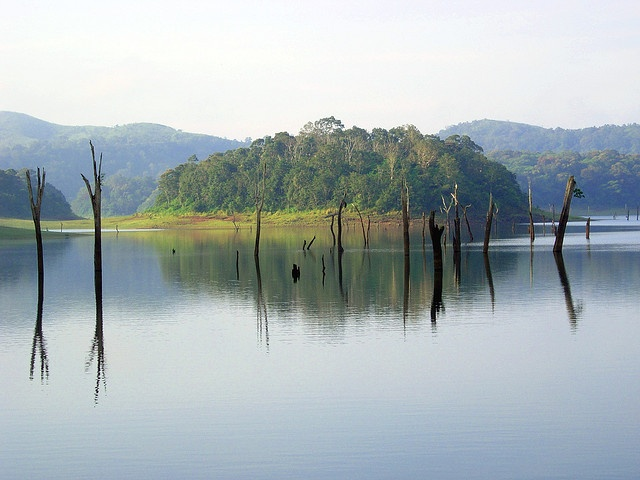 Thekkady is famous for Periyar Wildlife Sanctuary.