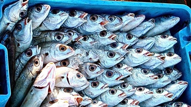 Spanske fisk