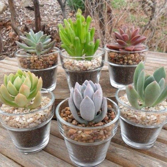Obsesión Suculentas = nubes en mini potes de vidrio!    # # suculentas plantas de interior # # amor # vidrio # ollas # naturaleza # de...