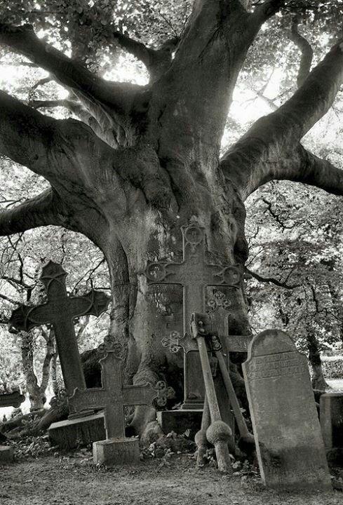 #cemeterie #cementerio #ByW                                                                                                                                                                                 Más